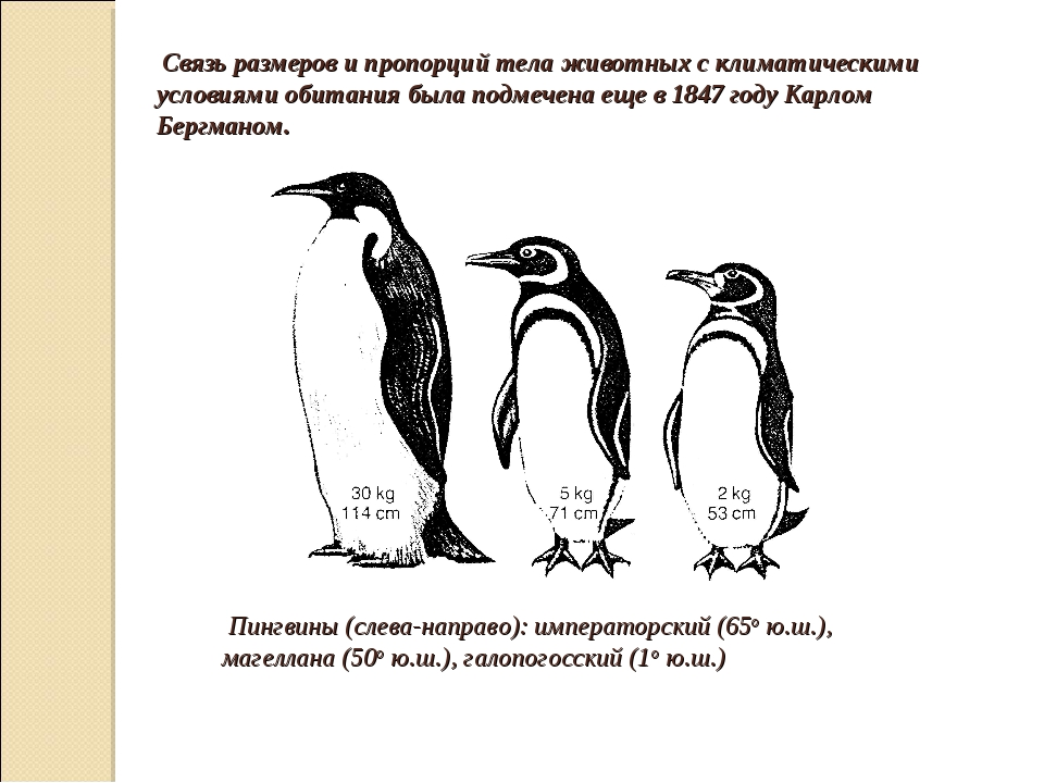 Связь размеров и пропорций тела животных с климатическими условиями обитания...