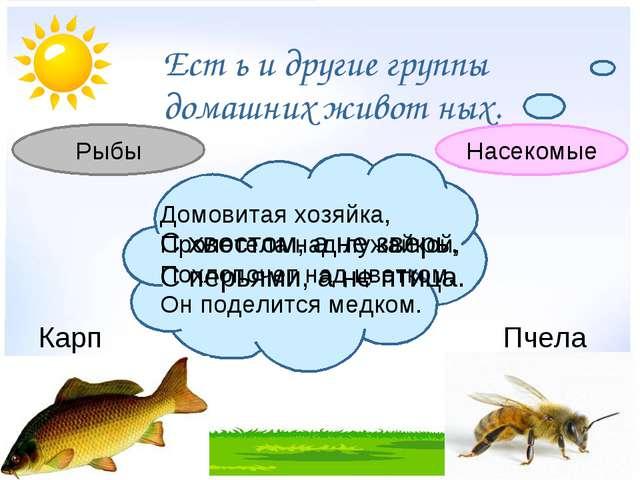 Ест ь и другие группы домашних живот ных. С хвостом, а не зверь, С перьями,...
