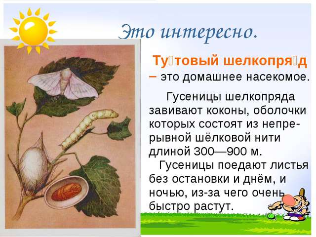 Это интересно. Ту́товый шелкопря́д – это домашнее насекомое. Гусеницы ше...