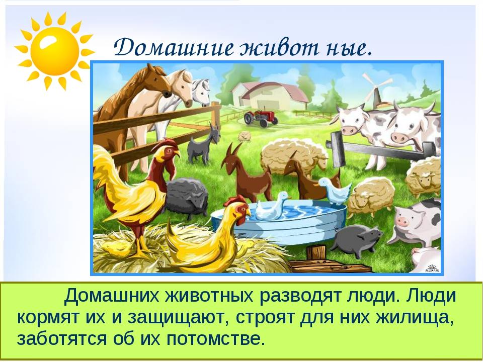 Домашние живот ные. Домашних животных разводят люди. Люди кормят их и защ...