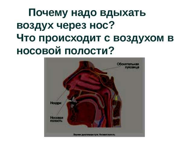 Почему надо вдыхать воздух через нос? Что происходит с воздухом в носовой по...