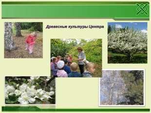 Древесные культуры Центра