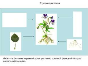 Строение растения Ли́ст— в ботанике наружный орган растения, основной функцие