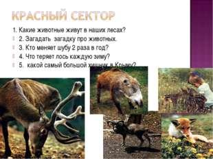 1. Какие животные живут в наших лесах? 2. Загадать загадку про животных. 3. К