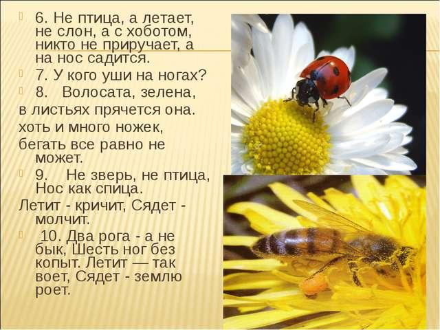 6. Не птица, а летает, не слон, а с хоботом, никто не приручает, а на нос сад...