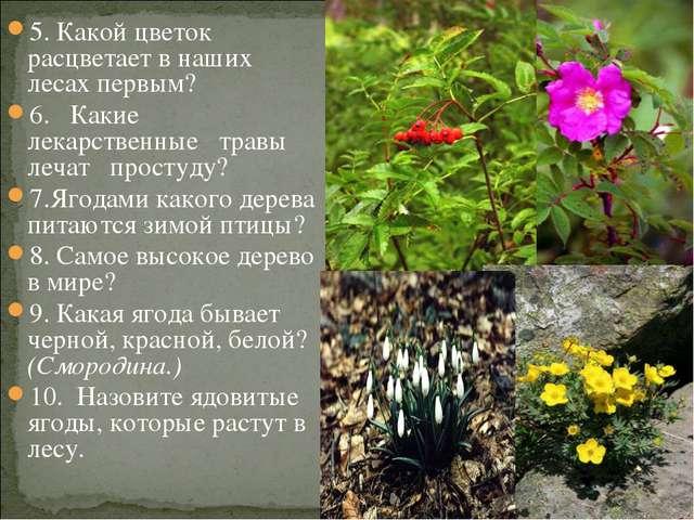 5. Какой цветок расцветает в наших лесах первым? 6. Какие лекарственные травы...
