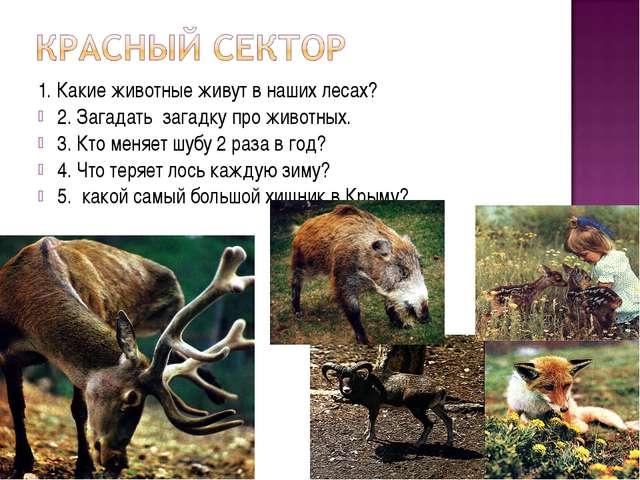 1. Какие животные живут в наших лесах? 2. Загадать загадку про животных. 3. К...
