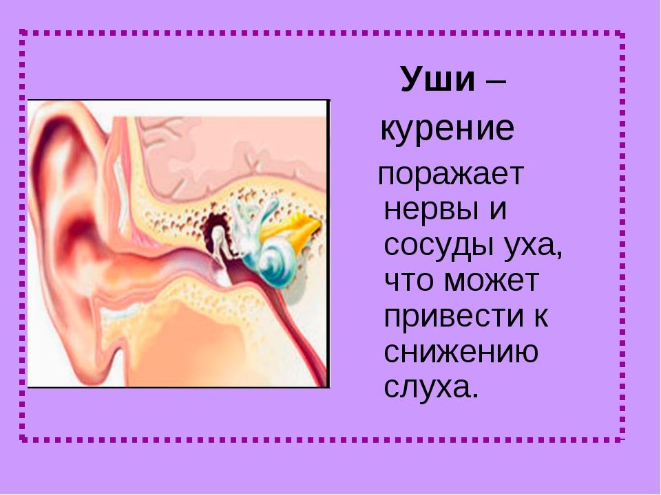 Уши – курение поражает нервы и сосуды уха, что может привести к снижению слу...