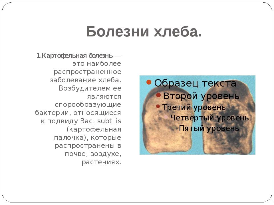 Болезни хлеба. 1.Картофельная болезнь — это наиболее распространенное заболев...