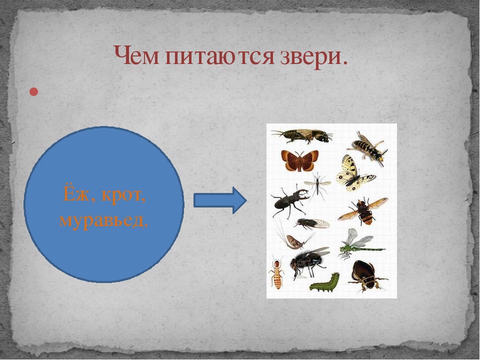 Чем питаются звери. Ёж, крот, муравьед.
