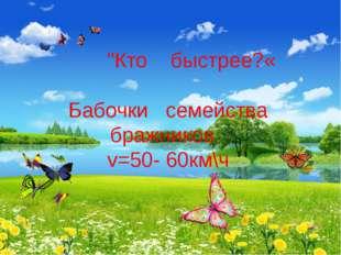 """""""Кто быстрее?«  Бабочки семейства бражников v=50- 60км\ч"""