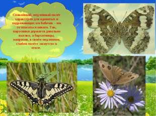 Спокойный, медленный полёт характерен для ядовитых и подражающих им бабочек –
