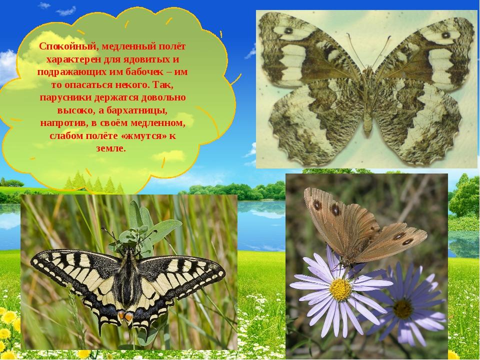 Спокойный, медленный полёт характерен для ядовитых и подражающих им бабочек –...