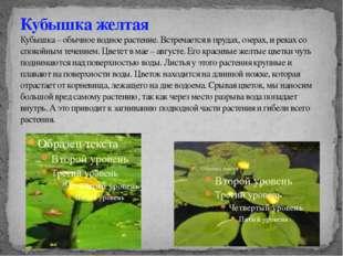 Кубышка желтая Кубышка – обычное водное растение. Встречается в прудах, озера