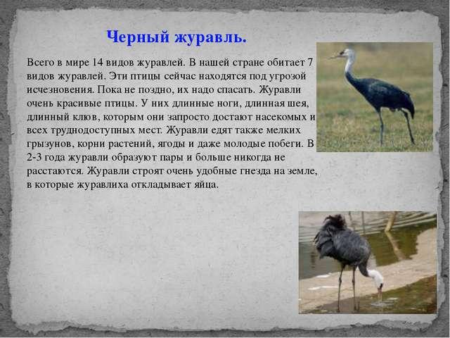 Черный журавль. Всего в мире 14 видов журавлей. В нашей стране обитает 7 7 ви...