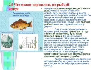 2.5 Что можно определить по рыбьей чешуе Чешуя – источник информации о жизни