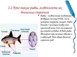 2.2 Кто такие рыбы, особенности их внешнего строения Рыбы – позвоночные живот
