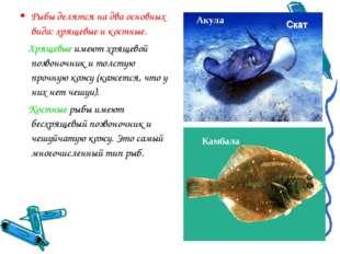 Рыбы делятся на два основных вида: хрящевые и костные. Хрящевые имеют хрящево