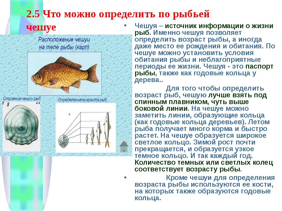 2.5 Что можно определить по рыбьей чешуе Чешуя – источник информации о жизни...