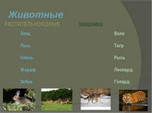 Животные РАСТИТЕЛЬНОЯДНЫЕ хищники Заяц Лось Олень Жираф Зебра Волк Тигр Рысь