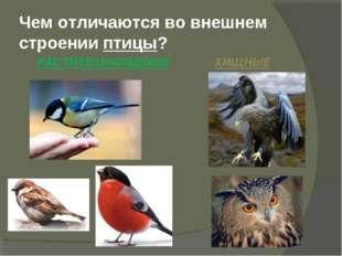 Чем отличаются во внешнем строении птицы? РАСТИТЕЛЬНОЯДНЫЕ ХИЩНЫЕ