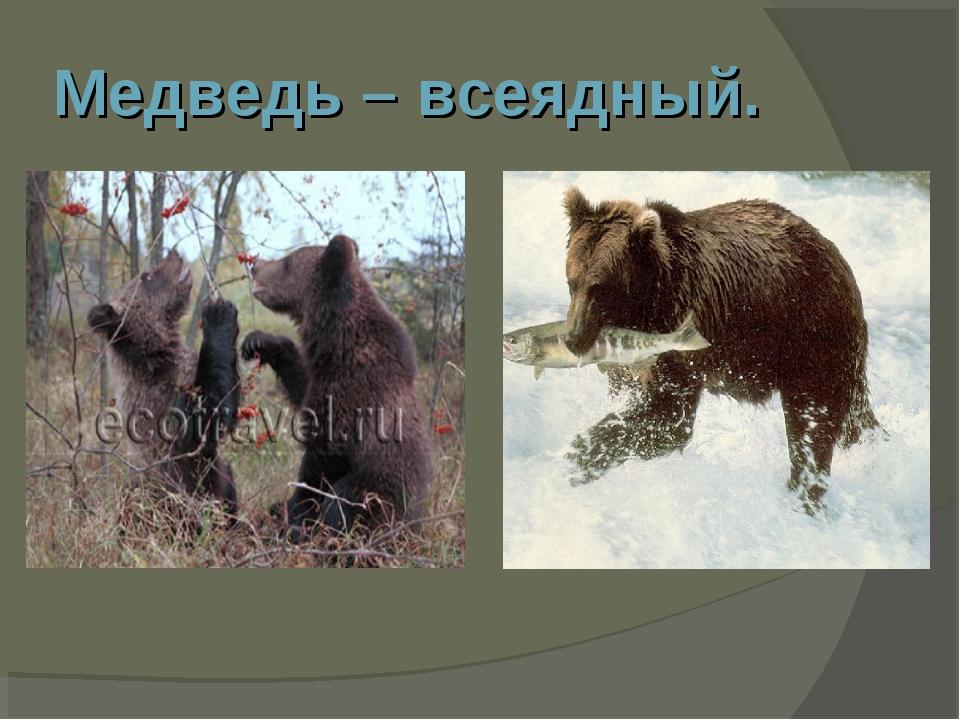 Медведь – всеядный.