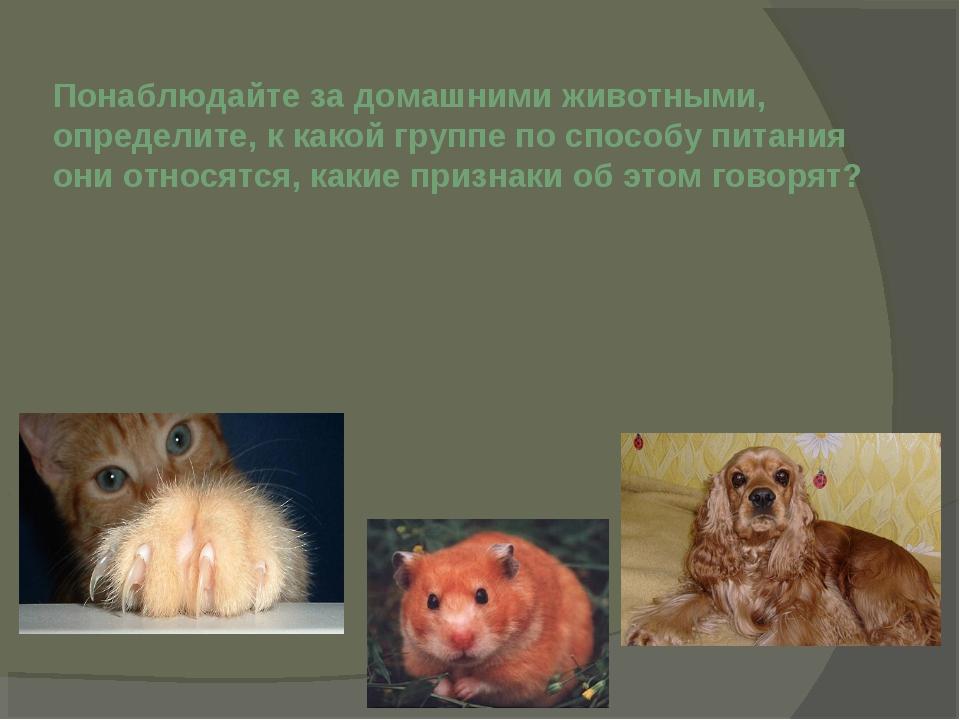 Понаблюдайте за домашними животными, определите, к какой группе по способу пи...