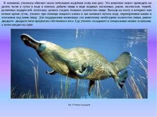 В основном, утконосы обитают около небольших водоёмов (озёр или рек). Это жи