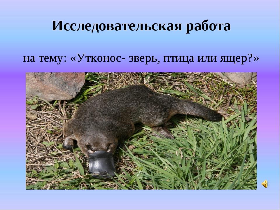 Исследовательская работа на тему: «Утконос- зверь, птица или ящер?»