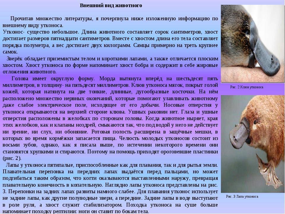 Внешний вид животного Прочитав множество литературы, я почерпнула ниже излож...