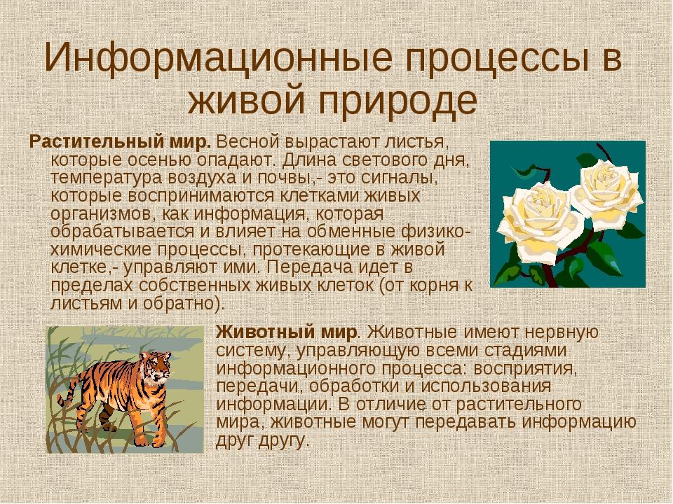 Информационные процессы в живой природе Растительный мир. Весной вырастают ли...