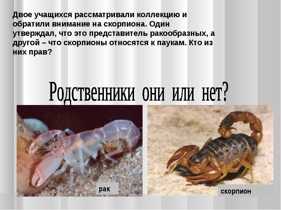 Двое учащихся рассматривали коллекцию и обратили внимание на скорпиона. Один...