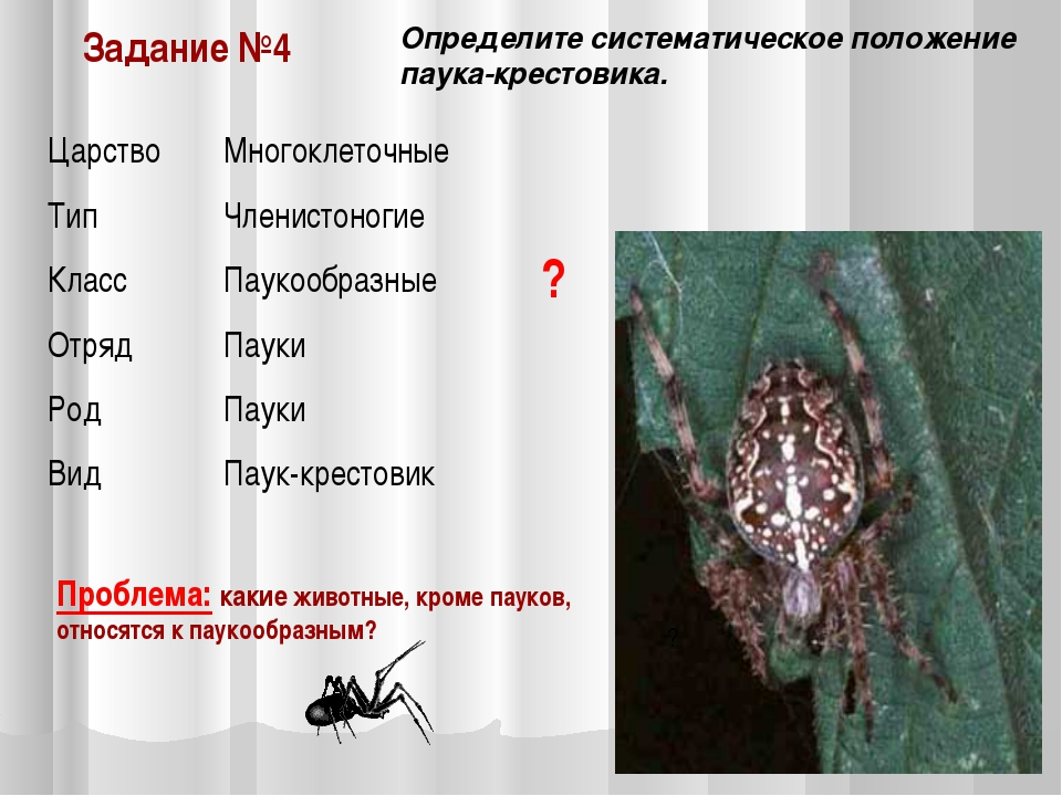 Задание №4 Определите систематическое положение паука-крестовика. Проблема: к...