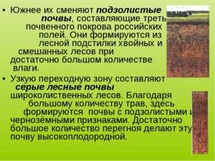 Южнее их сменяют подзолистые почвы, составляющие треть почвенного покрова рос