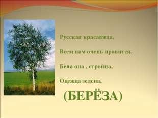 Русская красавица, Всем нам очень нравится. Бела она , стройна, Одежда зелена