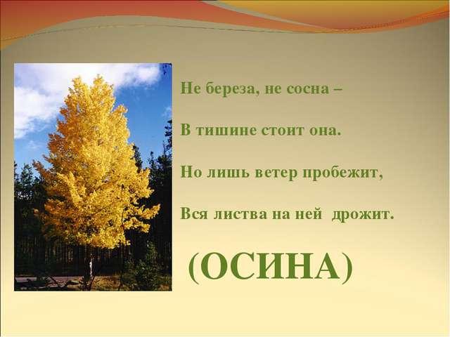 Не береза, не сосна – В тишине стоит она. Но лишь ветер пробежит, Вся листва...