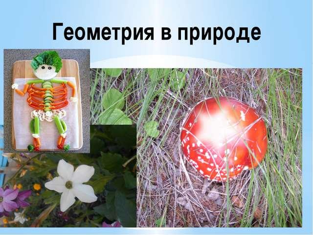 Геометрия в природе