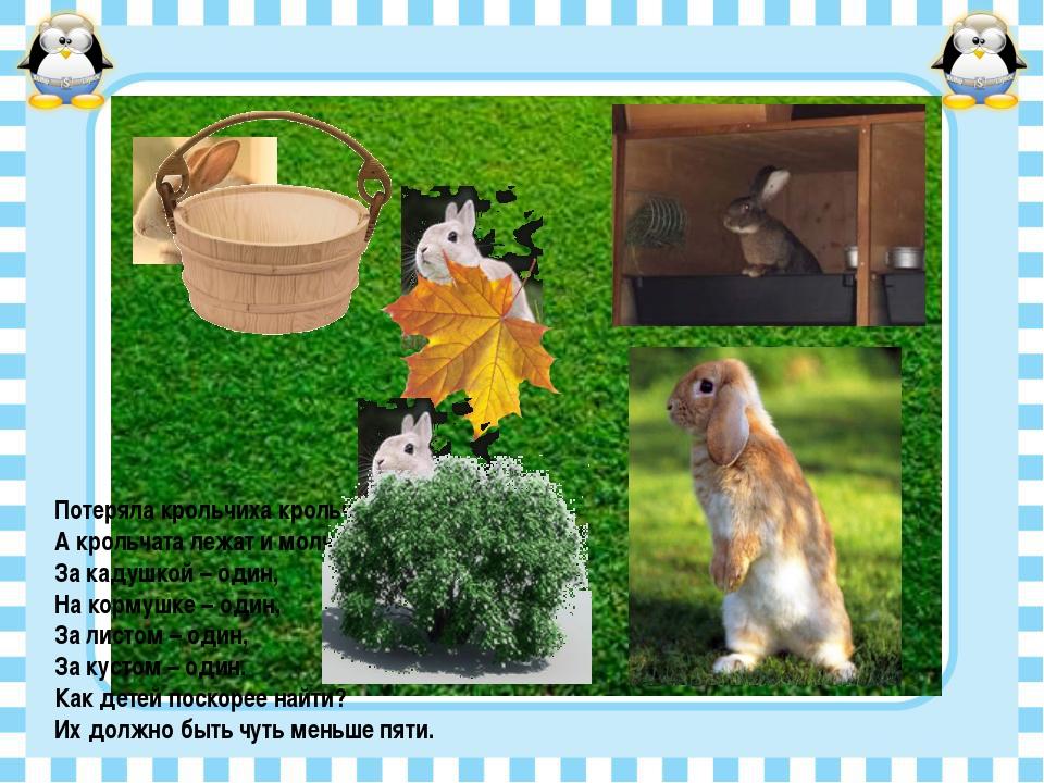 Потеряла крольчиха крольчат, А крольчата лежат и молчат: За кадушкой – один,...