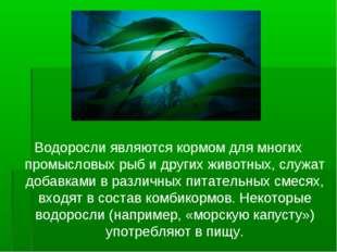 Водоросли являются кормом для многих промысловых рыб и других животных, служа