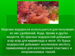 Морские водоросли используются для получения из них удобрений, йода, брома и