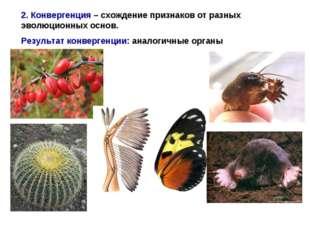 2. Конвергенция – схождение признаков от разных эволюционных основ. Результат