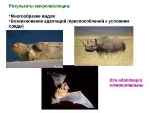 Результаты макроэволюции: Многообразие видов Возникновение адаптаций (приспос