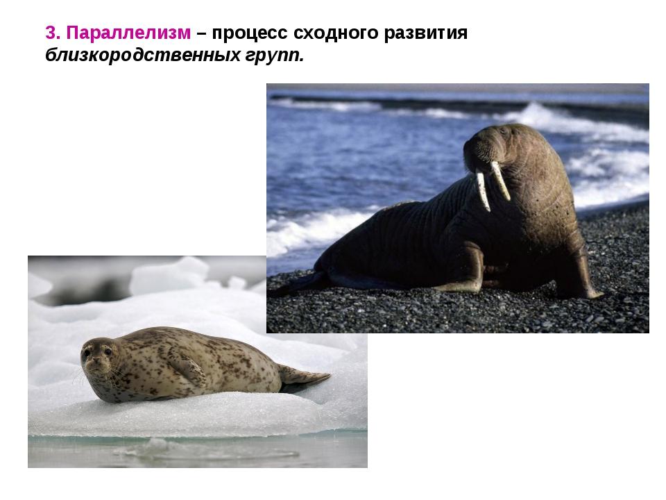 3. Параллелизм – процесс сходного развития близкородственных групп.