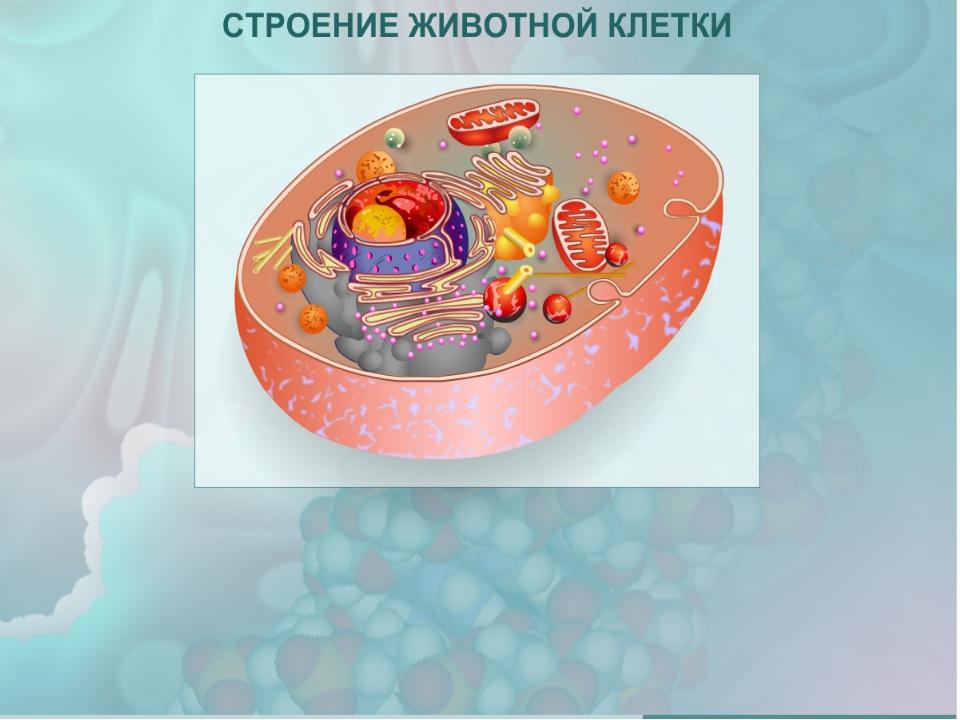 Строение клетки картинка с подписями