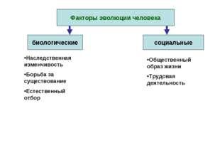 Факторы эволюции человека биологические социальные Наследственная изменчивост
