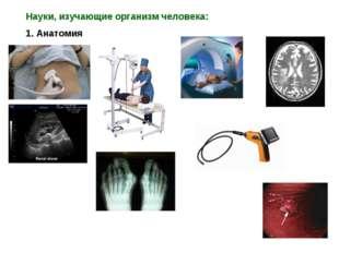 Науки, изучающие организм человека: 1. Анатомия