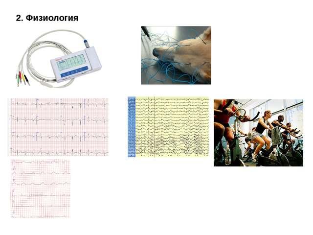 2. Физиология