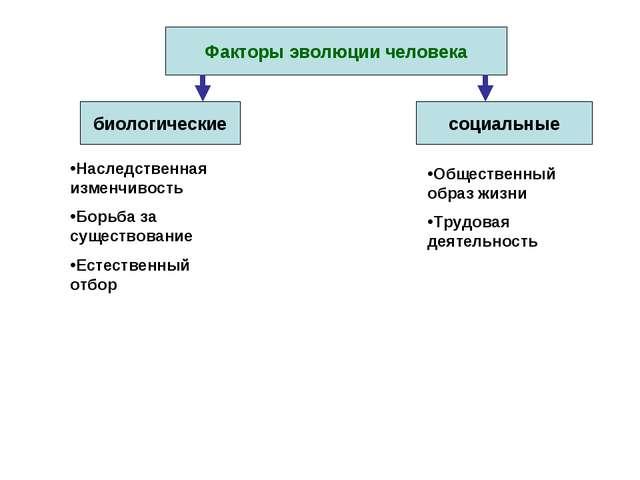 Факторы эволюции человека биологические социальные Наследственная изменчивост...