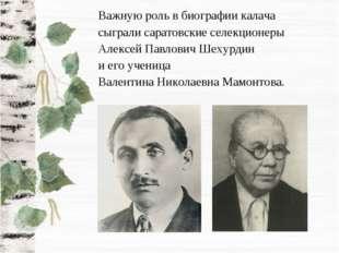 Важную роль в биографии калача сыграли саратовские селекционеры Алексей Павло