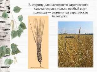 В старину для настоящего саратовского калача годился только особый сорт пшени